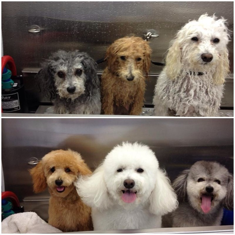 hair dogs grooming
