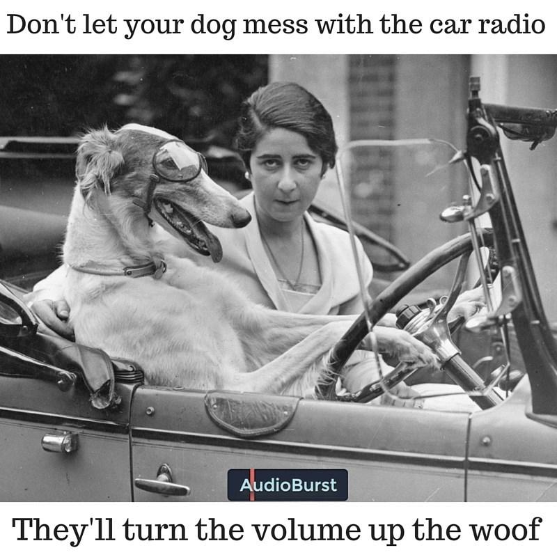 radio dogs woof vintage