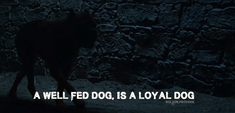 dogs Game of Thrones - 8819229440