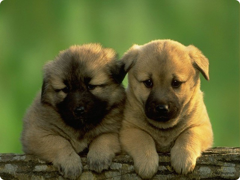 dogs puppies - 8819244800