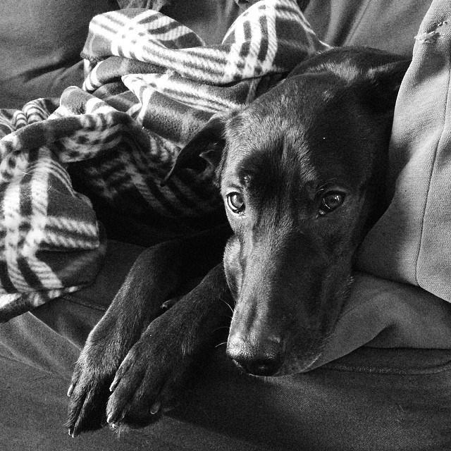 dogs black - 8819245056
