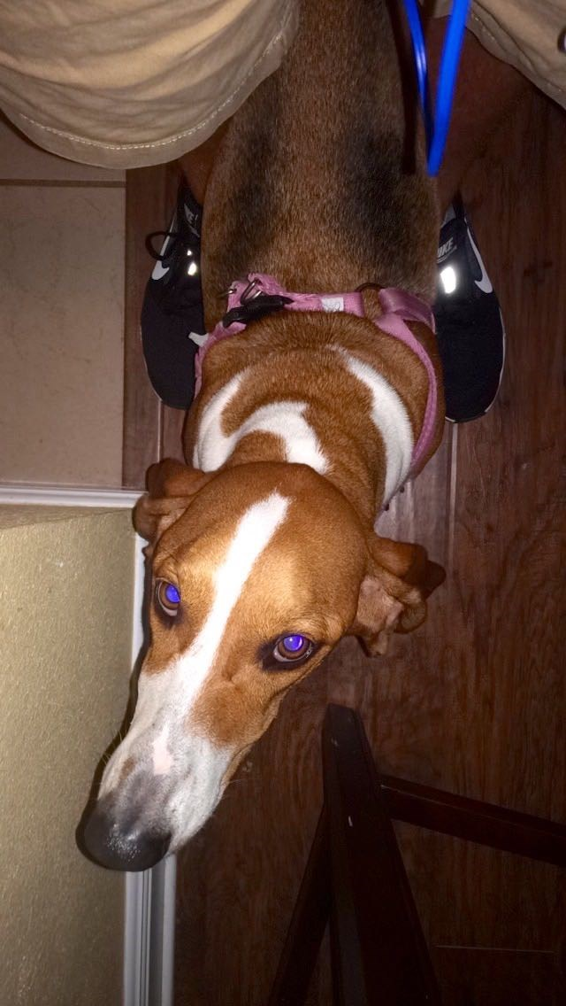 dogs eyes flash - 8819254016