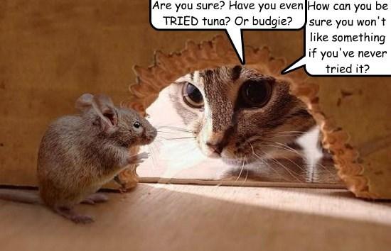 like tried cat tuna never wont budgie caption mouse - 8819272448