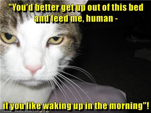 animals like cat out bed feed morning waking up - 8819273728