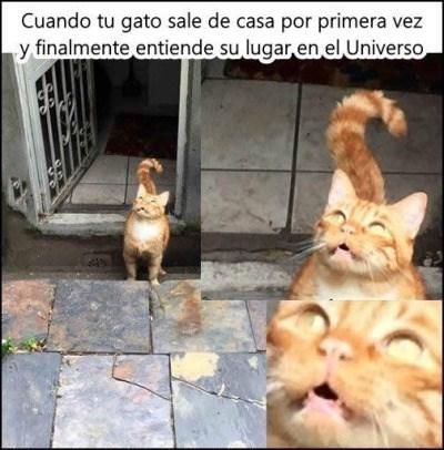 gato afuera