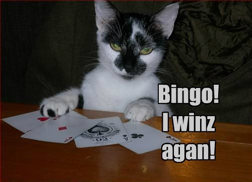 i win cat again caption bingo