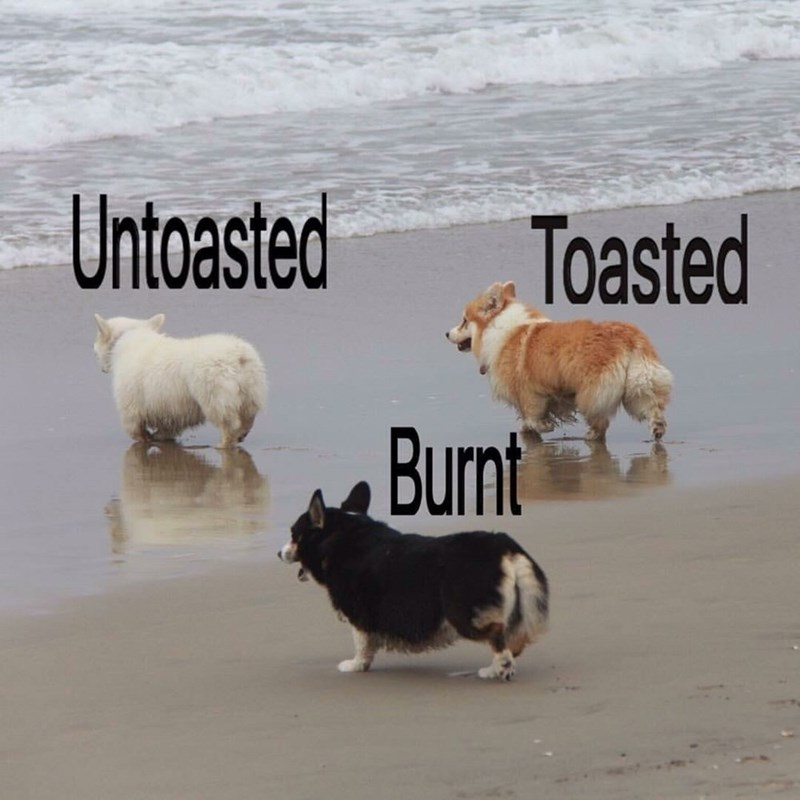 corgi buns only come in three different flavors
