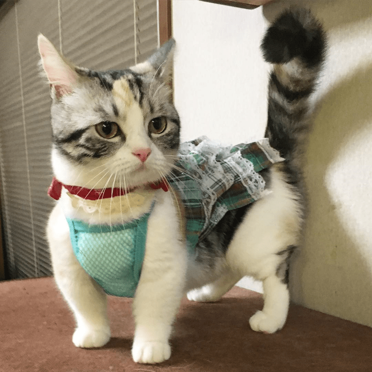 cat is not amused by outfit