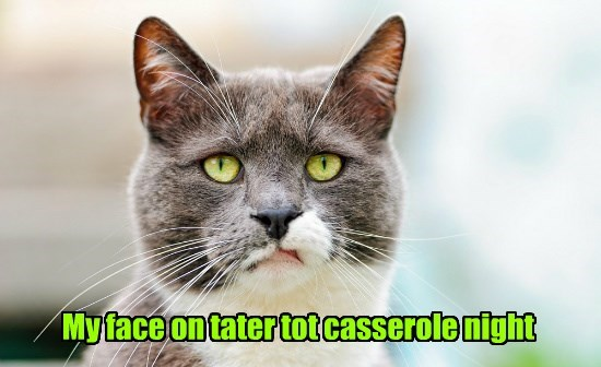 cat face my night caption tater tot casserole - 8819453184