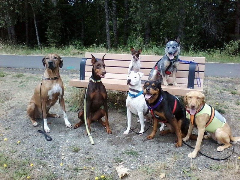 dogs,pack,bench