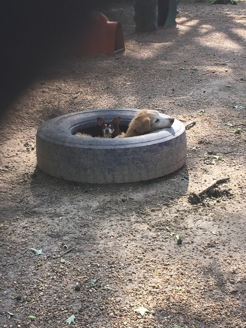 dogs tire - 8819568896