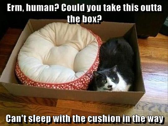 Erm, human? Could you take this outta the box?  Can't sleep with the cushion in the way