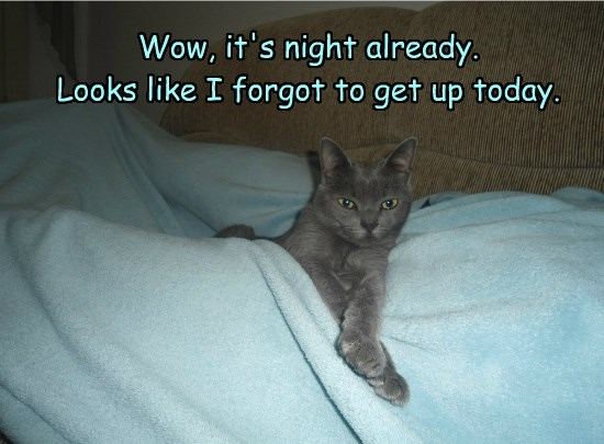 cat already get up night caption forgot today - 8819691520