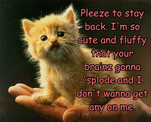 on,explode,want,stay,brains,any,Fluffy,me,kitten,cute,please,dont,back,caption