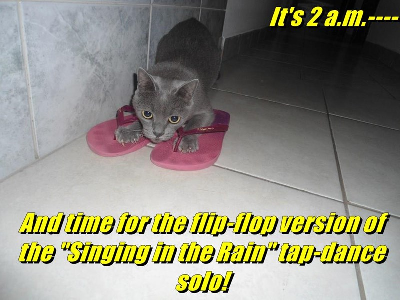 Flip Flappin Flat Footed Feline Lolcats Lol Cat Memes Funny