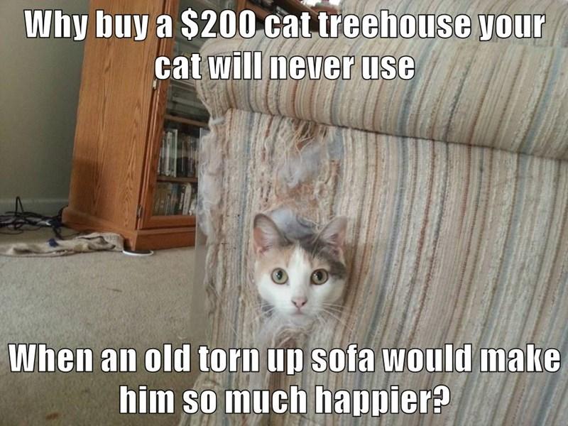 Cat economics