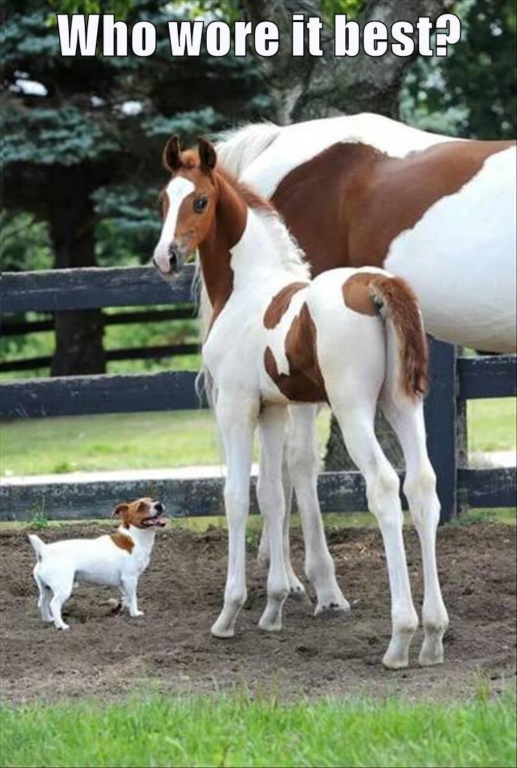 animals - 8819764224