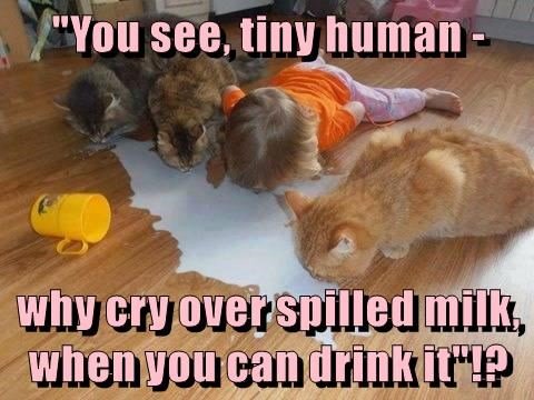 """You see, tiny human -  why cry over spilled milk, when you can drink it""!?"