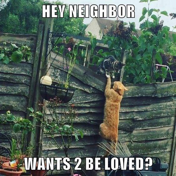 HEY NEIGHBOR  WANTS 2 BE LOVED?