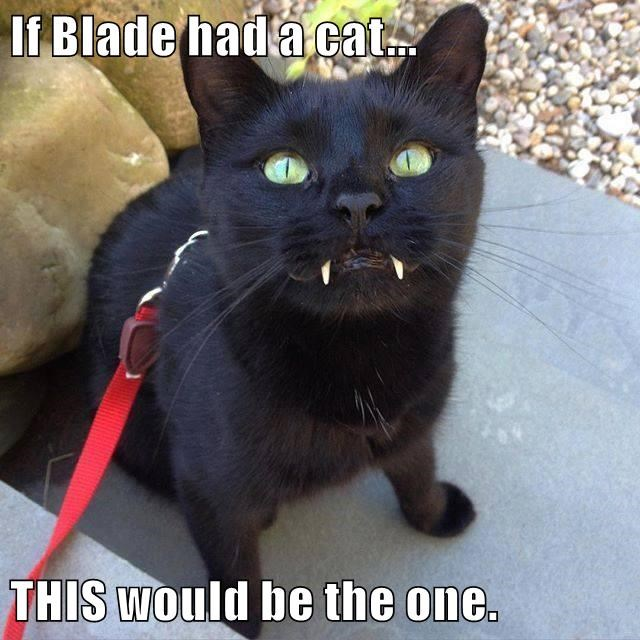 If Blade had a cat...  THIS would be the one.
