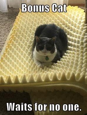 Bonus Cat  Waits for no one.