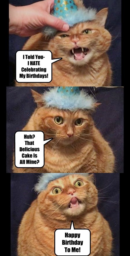 3 panels of ginger cat wearing blue fluffy birthday hat and looking angry then hungry happy birthday meme