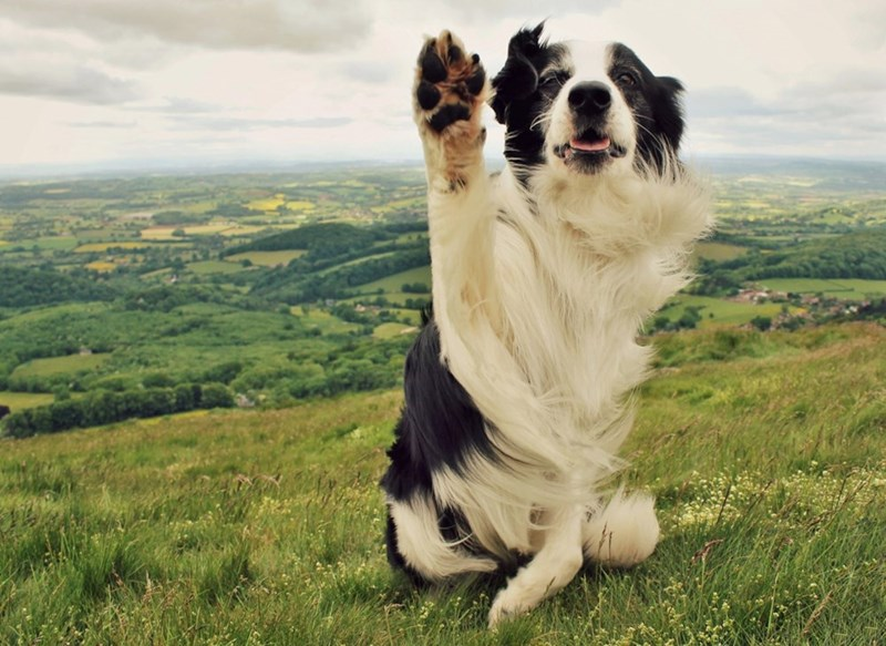 hello,dogs,paw,majestic