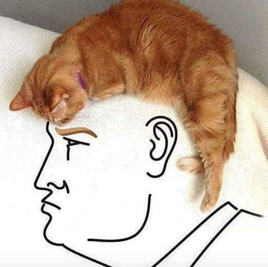cat donald trump republican - 8819971072