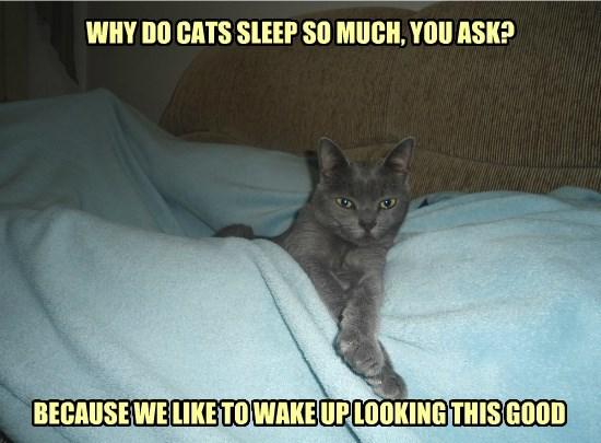 I Need My Mew-y Sleep