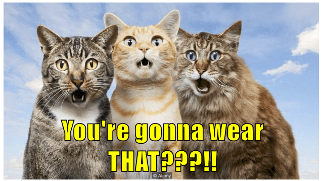You're gonna wear THAT???!!