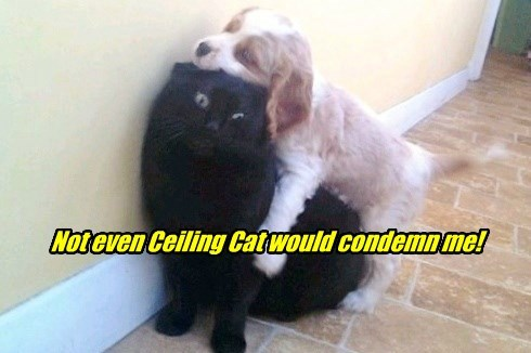 cat,dogs,even,condemn,ceiling cat,not,caption