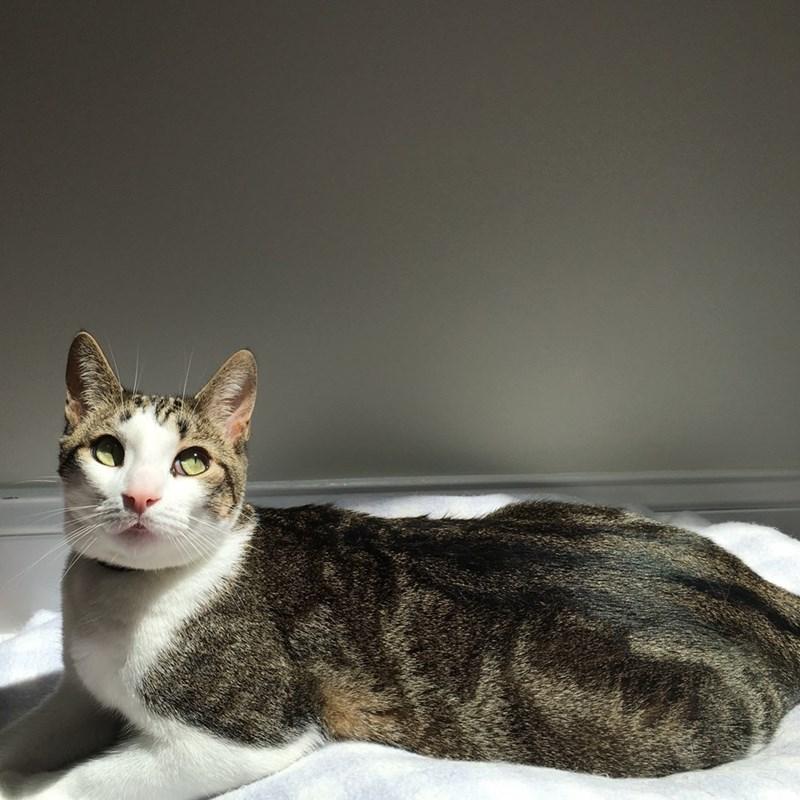 innocent,sunshine,Cats
