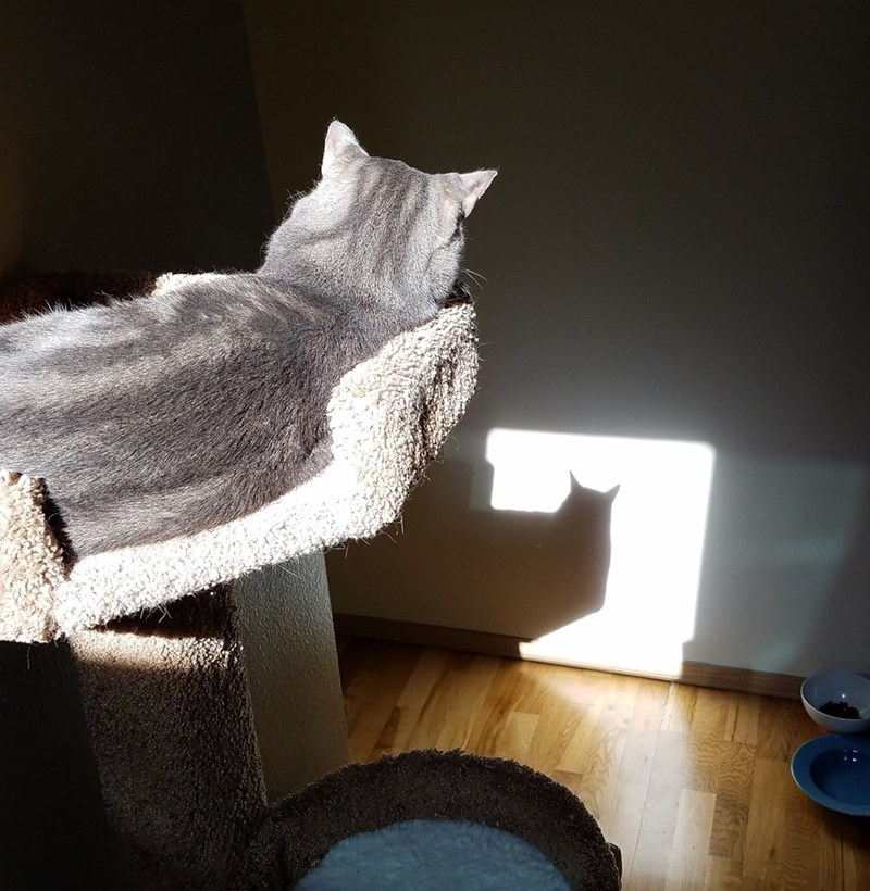 signal shadow Cats