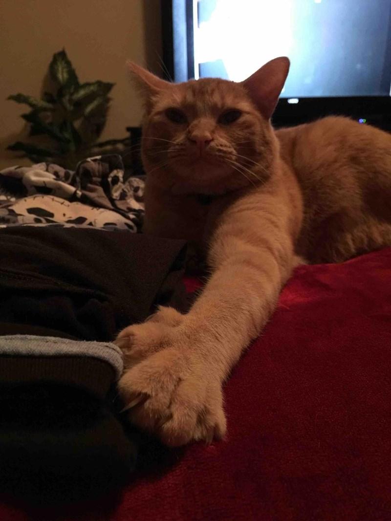 claim shirts Cats - 8820083712