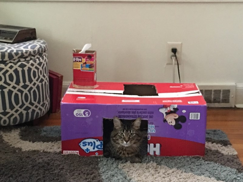 box,Cats,home