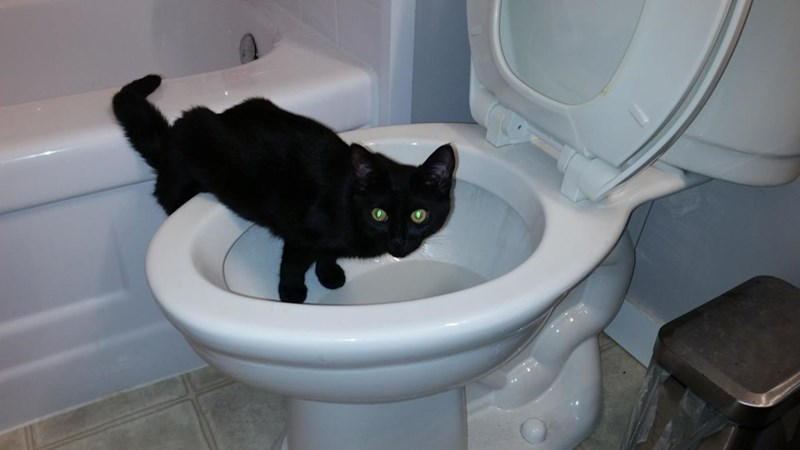 busted,toilet,Cats