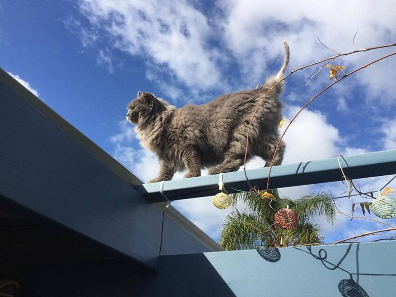 sky Cats patrol