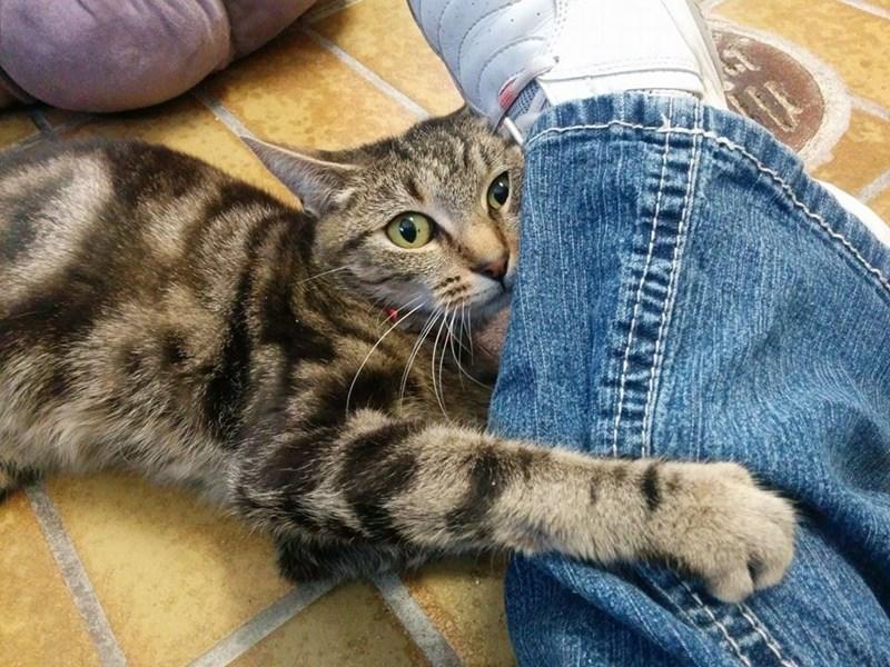 cling Cats leg - 8820090624