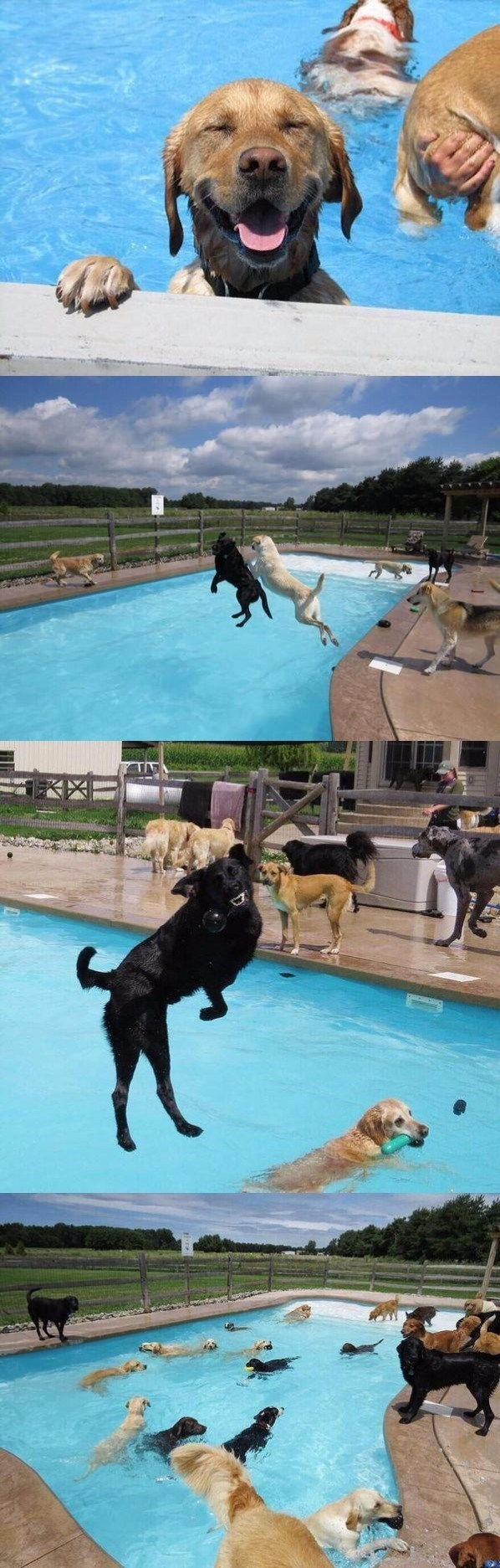 Awesome party for dogs by the pool. These cute dogs are having fun.