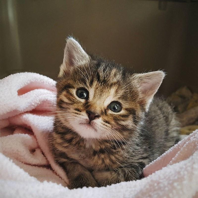 kitten cute Cats - 8820110336