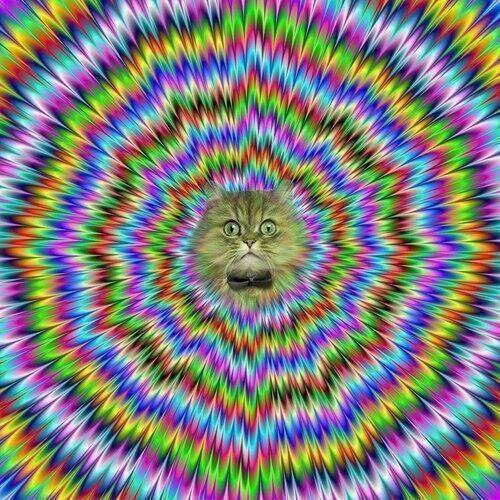 all hail hypno cat