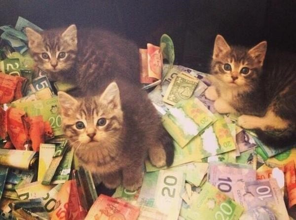 started from the bottom meow were here
