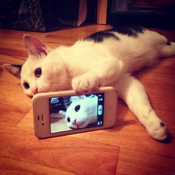 snapcat cute cats cat pictures cute kittens