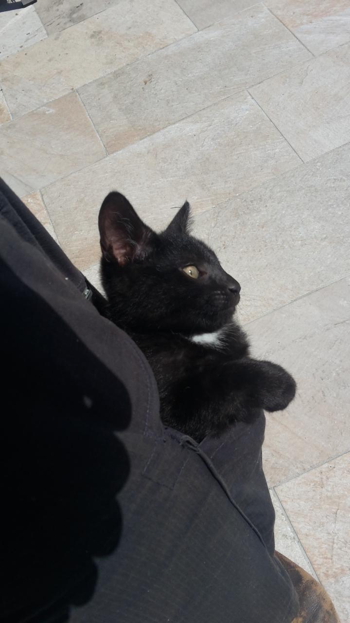pocket Cats - 8820143360