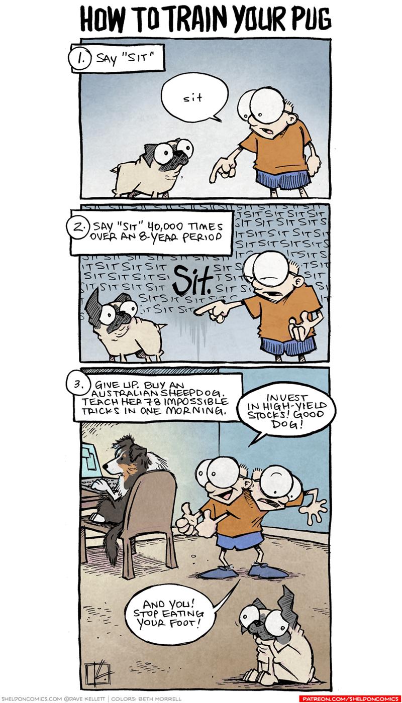 web-comics-how-to-train-your-dog-if-its-a-pug