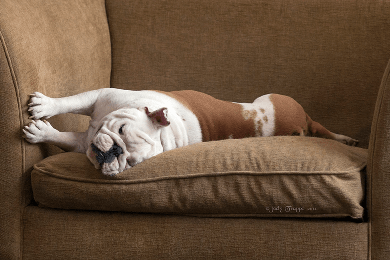 bulldog dogs sleeping - 8820198144