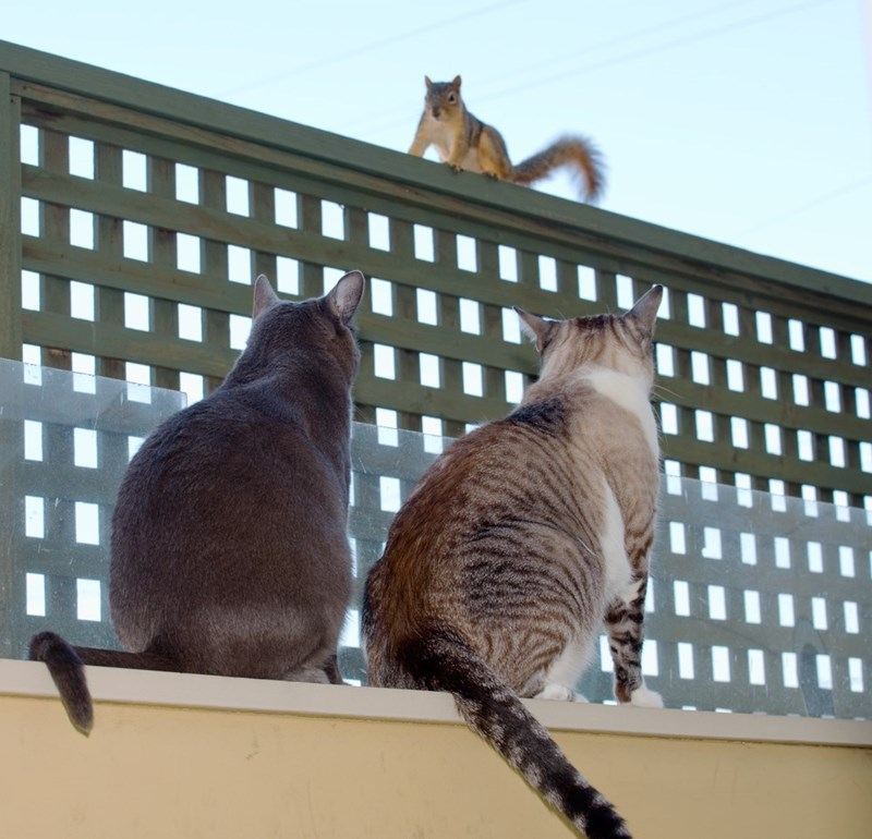 squirrel,Cats