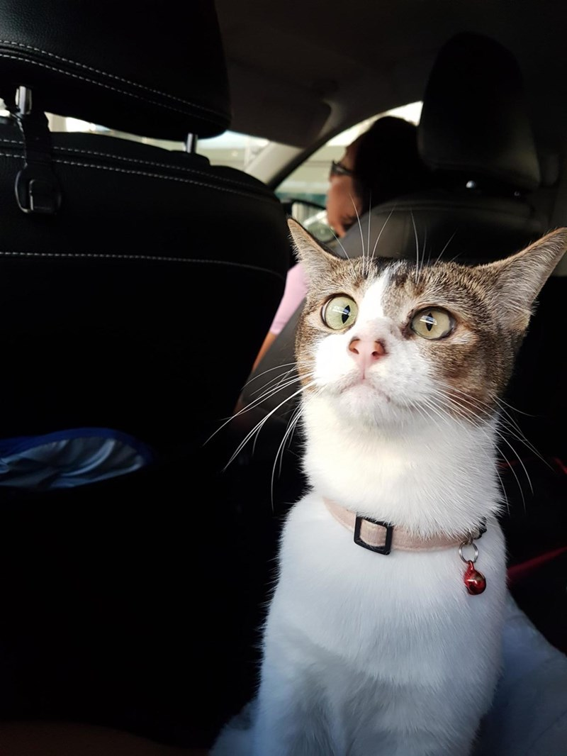 Cats,car,cross eyed