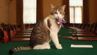 cat david cameron mouser eviction working cat downing street