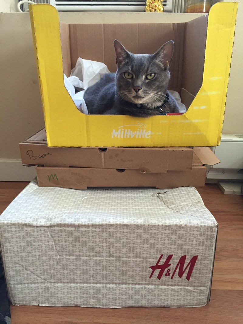 boxes Cats - 8820397568